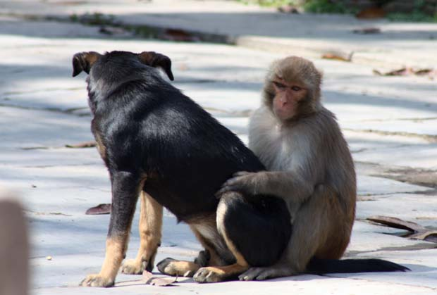 Dog & Monkey having sex 1