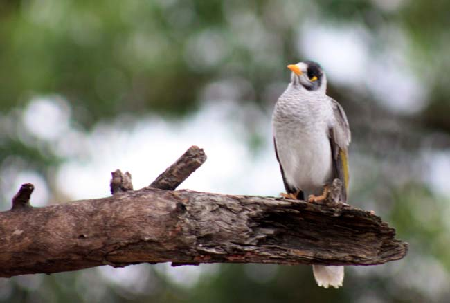 Sydney Birds 2